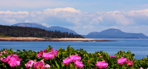 Great Duck Island Flora by the Sea
