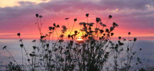 Great Duck Island House | Sunset through wildflowers