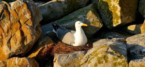 Great Duck Island House | Wildlife