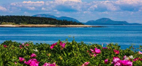 Great Duck Island House | Flowers before the shoreline