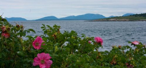 Great Duck Island House | Flowers on the shoreline