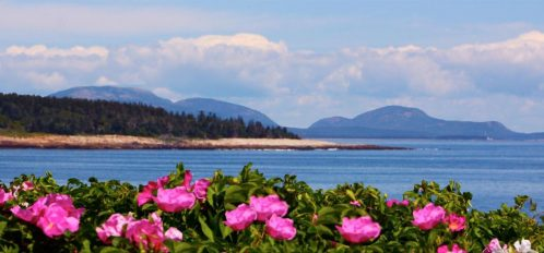 The flowers before the shoreline and mountains beyond